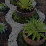 manutencao-jardins-calheta-em-flor